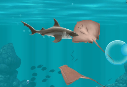 hungry shark evolution guide - hammer shark